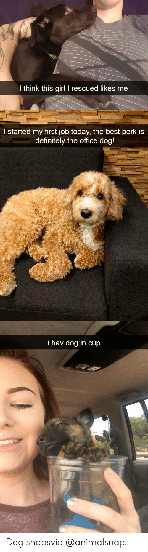 Definitely, Target, and The Office: l think this girl I rescued likes me   l started my first job today, the best perk is  definitely the office doa   i hav dog in cup Dog snapsvia @animalsnaps