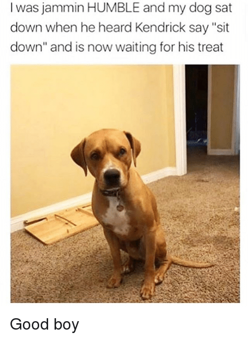 """Jammin: l was jammin HUMBLE and my dog sat  down when he heard Kendrick say """"sit  down"""" and is now waiting for his treat Good boy"""