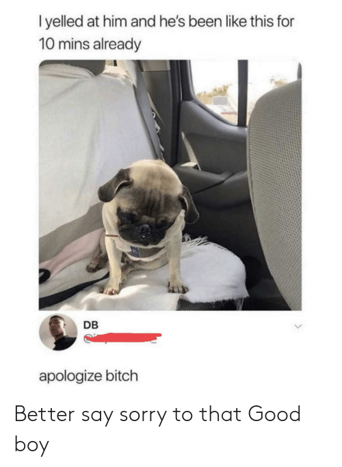 Bitch, Sorry, and Good: l yelled at him and he's been like this for  10 mins already  DB  apologize bitch Better say sorry to that Good boy