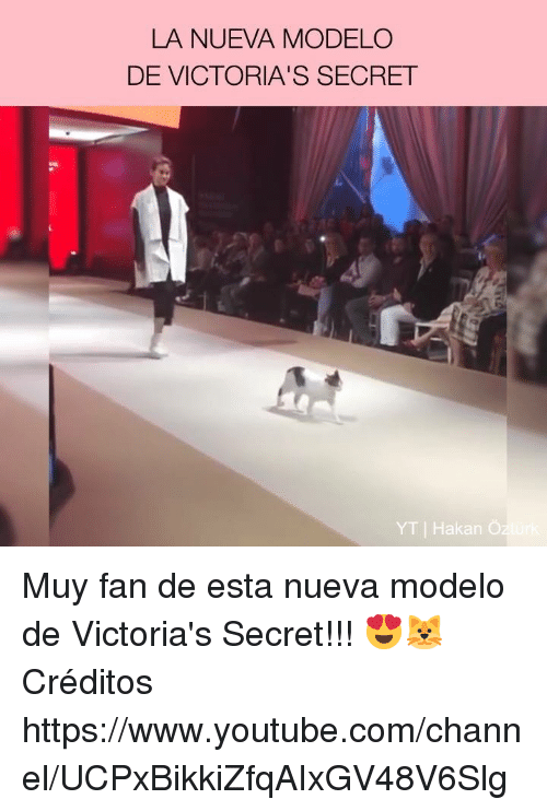 Memes, Victoria's Secret, and youtube.com: LA NUEVA MODELO  DE VICTORIA'S SECRET  YT | Hakan Oz Muy fan de esta nueva modelo de Victoria's Secret!!! 😍🐱  Créditos https://www.youtube.com/channel/UCPxBikkiZfqAIxGV48V6Slg