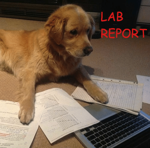 Lab Report, Lab, and Report: LAB  REPORT