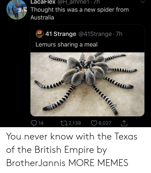 you never know: LacaFlex @H_amme1: /h.  Thought this was a new spider from  Australia  41 Strange @41 Strange 7h  Lemurs sharing a meal  14  2,139  6,027 You never know with the Texas of the British Empire by BrotherJannis MORE MEMES