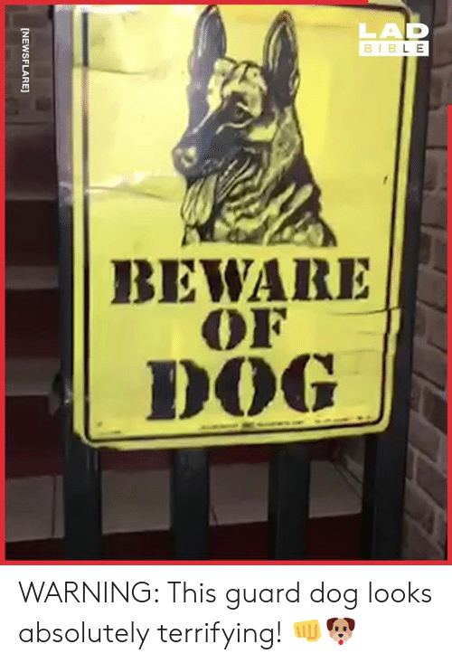 Dank, 🤖, and Dog: LAD  B I  B L E  BEWARE  OF  DOG WARNING: This guard dog looks absolutely terrifying! 👊🐶