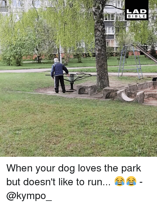 Memes, Run, and 🤖: LAD  BIB L E When your dog loves the park but doesn't like to run... 😂😂 - @kympo_
