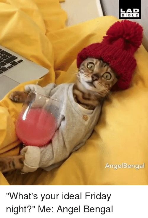 """Dank, Friday, and Angel: LAD  BIBL E  AngelBengal """"What's your ideal Friday night?"""" Me:  Angel Bengal"""