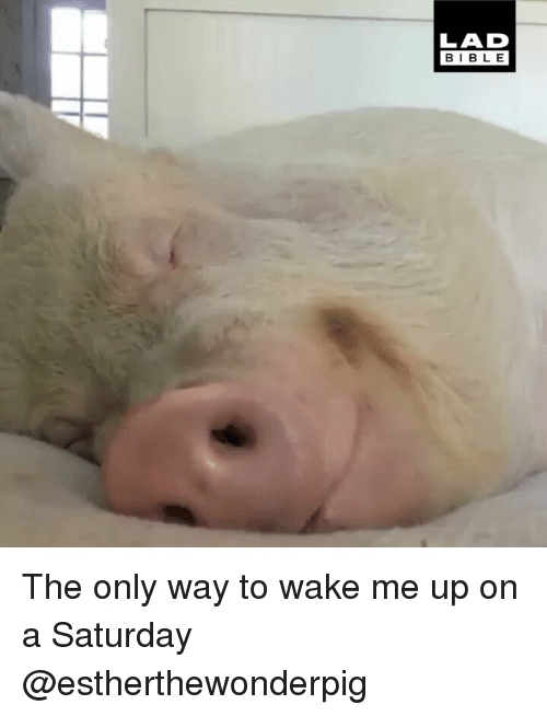 Memes, 🤖, and Wake: LAD  BIBL E The only way to wake me up on a Saturday @estherthewonderpig