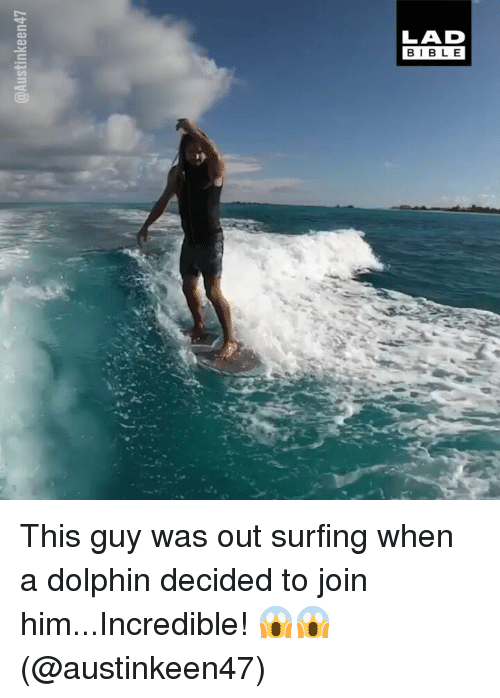 surfing: LAD  BIBL E This guy was out surfing when a dolphin decided to join him...Incredible! 😱😱 (@austinkeen47)