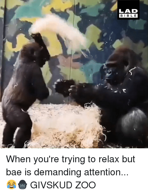 Bae, Dank, and 🤖: LAD  BIBL E When you're trying to relax but bae is demanding attention... 😂🦍  GIVSKUD ZOO