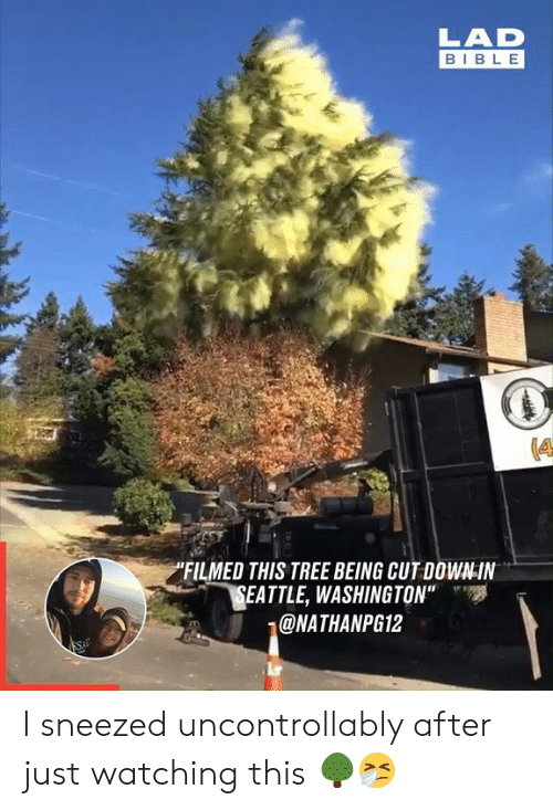 """Dank, Bible, and Seattle: LAD  BIBLE  """"FILMED THIS TREE BEING CUT DOWN-IN  SEATTLE, WASHINGTON""""  @NATHANPG12  SAD I sneezed uncontrollably after just watching this 🌳🤧"""