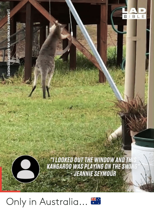 """Dank, Australia, and Bible: LAD  BIBLE  """"ILOOKED OUT THE WINDOW AND THIS  KANGAROO WAS PLAYING ON THE SWING  JEANNIE SEYMOUR  [JEANNIE SEYMOUR VIA STORYTRENDER]T Only in Australia... 🇦🇺"""