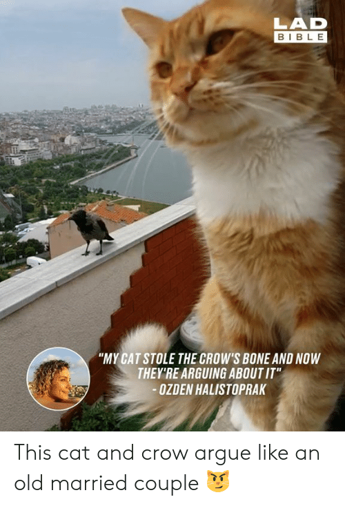 """Arguing, Dank, and Bible: LAD  BIBLE  """"MY CAT STOLE THE CROW'S BONE AND NOW  THEY'RE ARGUING ABOUT IT""""  OZDEN HALISTOPRAK This cat and crow argue like an old married couple 😼"""