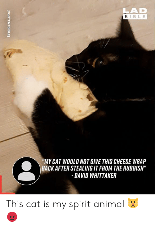"Dank, Animal, and Bible: LAD  BIBLE  ""MY CAT WOULD NOT GIVE THIS CHEESE WRAP  BACK AFTER STEALING IT FROM THE RUBBISH""  DAVID WHITTAKER  [CONTENTBIBLE This cat is my spirit animal 😾😡"
