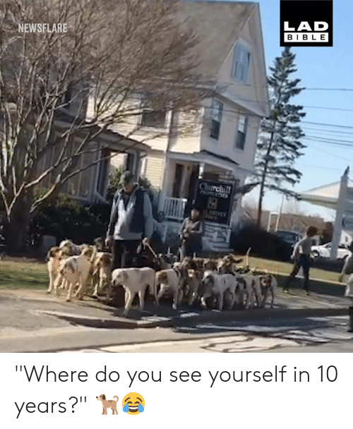 "Dank, Bible, and 🤖: LAD  BIBLE  NEWSFLARE ""Where do you see yourself in 10 years?"" 🐕😂"