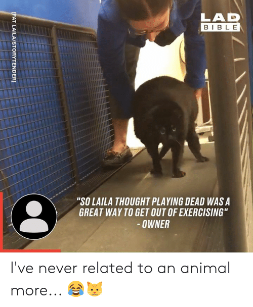 """Playing Dead: LAD  BIBLE  """"SO LAILA THOUGHT PLAYING DEAD WAS A  GREAT WAY TO GET OUT OF EXERCISING""""  -OWNER  [FAT LAILA/STORYTENDER] I've never related to an animal more... 😂🐱"""