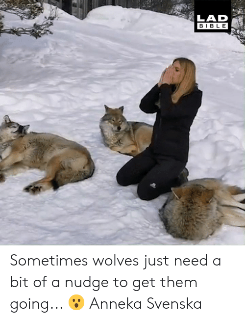 Dank, Bible, and Wolves: LAD  BIBLE Sometimes wolves just need a bit of a nudge to get them going... 😮  Anneka Svenska