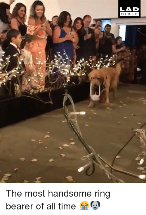 Dank, Bible, and Time: LAD  BIBLE The most handsome ring bearer of all time 😭🐶