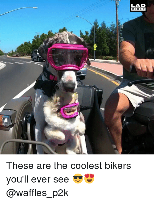 waffles: LAD  BIBLE These are the coolest bikers you'll ever see 😎😍 @waffles_p2k