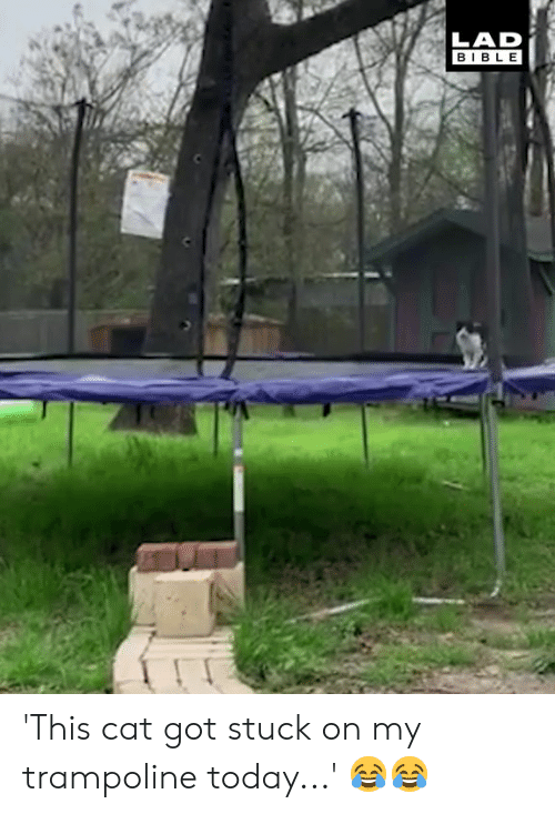 Trampoline: LAD  BIBLE 'This cat got stuck on my trampoline today...' 😂😂