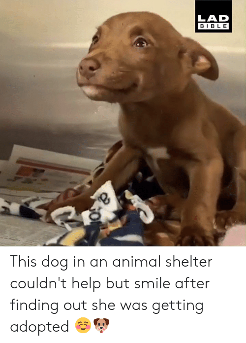 Animal Shelter: LAD  BIBLE This dog in an animal shelter couldn't help but smile after finding out she was getting adopted ☺️🐶