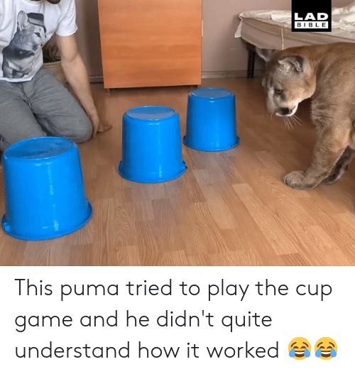 Puma: LAD  BIBLE This puma tried to play the cup game and he didn't quite understand how it worked 😂😂