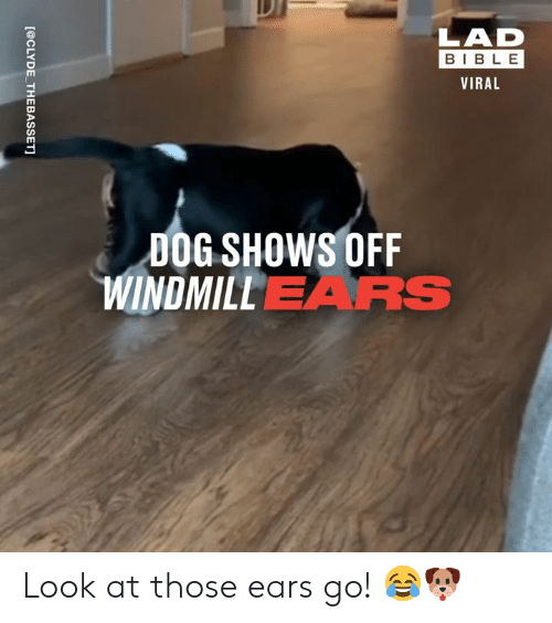 Dank, Bible, and 🤖: LAD  BIBLE  VIRAL  DOG SHOWS OFF  WINDMILLEARS  [@CLYDE THEBASSET] Look at those ears go! 😂🐶