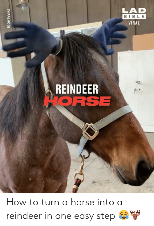 Dank, Bible, and Horse: LAD  BIBLE  VIRAL  REINDEER  HORSE  [VIRALHOG] How to turn a horse into a reindeer in one easy step 😂🦌