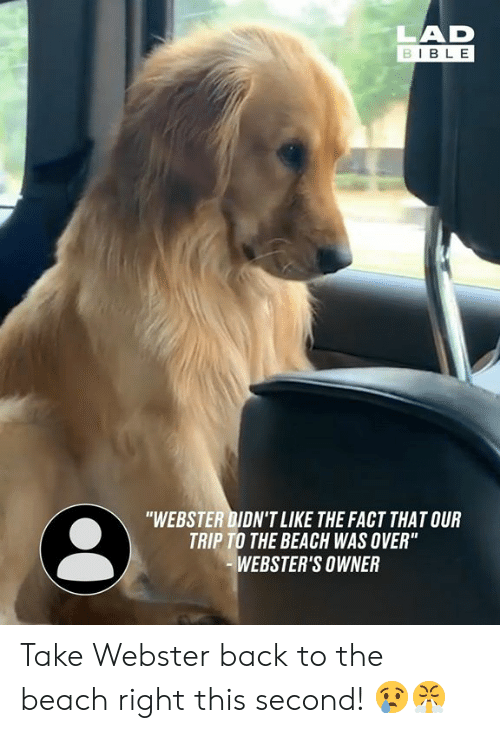 "Dank, Beach, and Bible: LAD  BIBLE  ""WEBSTER DIDN'T LIKE THE FACT THAT OUR  TRIP TO THE BEACH WAS OVER""  WEBSTER'S OWNER Take Webster back to the beach right this second! 😢😤"