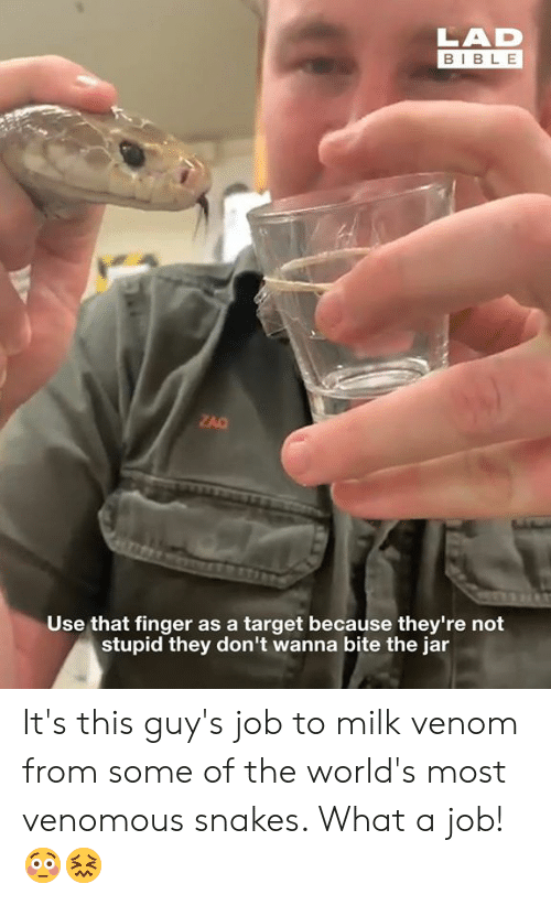 venom: LAD  BIBLE  ZAC  Use that finger as a target because they're not  stupid they don't wanna bite the jar It's this guy's job to milk venom from some of the world's most venomous snakes. What a job! 😳😖