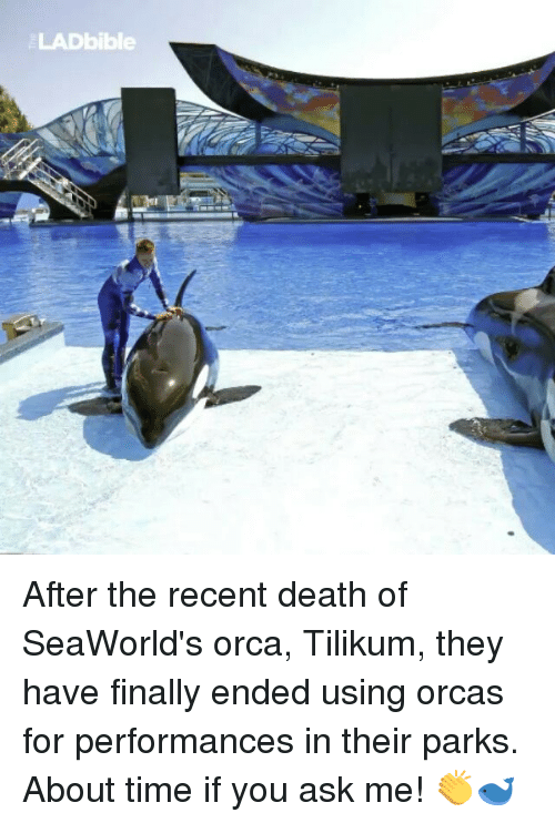 SeaWorld: LADbible After the recent death of SeaWorld's orca, Tilikum, they have finally ended using orcas for performances in their parks. About time if you ask me! 👏🐋