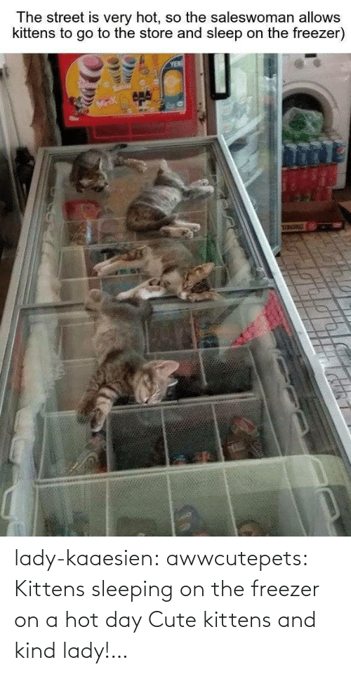 cute: lady-kaaesien: awwcutepets: Kittens sleeping on the freezer on a hot day Cute kittens and kind lady!…