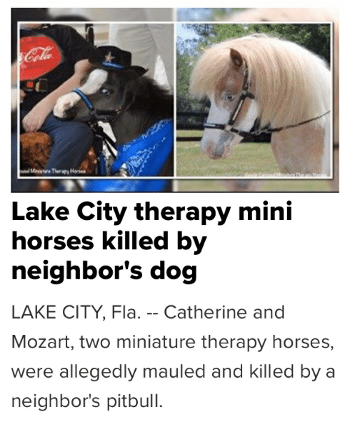 Horses, Pitbull, and Mozart: Lake City therapy mini  horses killed by  neighbor's dog  LAKE CITY, Fla. -- Catherine and  Mozart, two miniature therapy horses,  were allegedly mauled and killed by a  neighbor's pitbull.