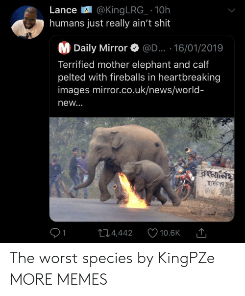 Uk News: Lance @King LRG_ 10h  humans just really ain't shit  M Daily Mirror  @D... 16/01/2019  Terrified mother elephant and calf  pelted with fireballs in heartbreaking  images mirror.co.uk/news/world-  new...  বহমা্নিয়  হার্ও  214,442  10.6K The worst species by KingPZe MORE MEMES