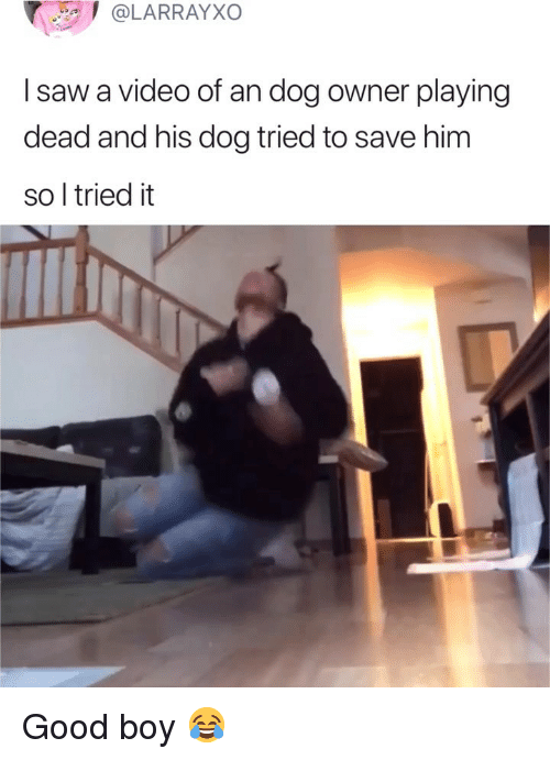 Playing Dead: @LARRAYXO  I saw a video of an dog owner playing  dead and his dog tried to save him  so l tried it Good boy 😂