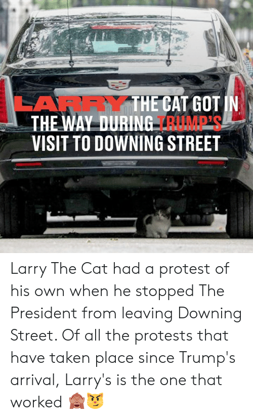Protests: LARRYTHE CAT GOT IN  THE WAY DURING RUMP'S  VISIT TO DOWNING STREET Larry The Cat had a protest of his own when he stopped The President from leaving Downing Street. Of all the protests that have taken place since Trump's arrival, Larry's is the one that worked 🙈😼