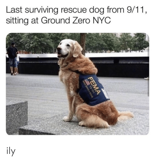 surviving: Last surviving rescue dog from 9/11  sitting at Ground Zero NYC ily