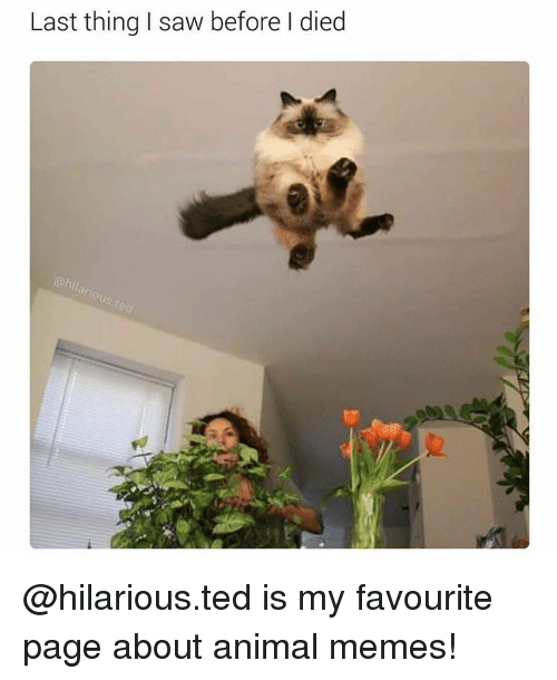 Animation Meme: Last thing I saw before died @hilarious.ted is my favourite page about animal memes!