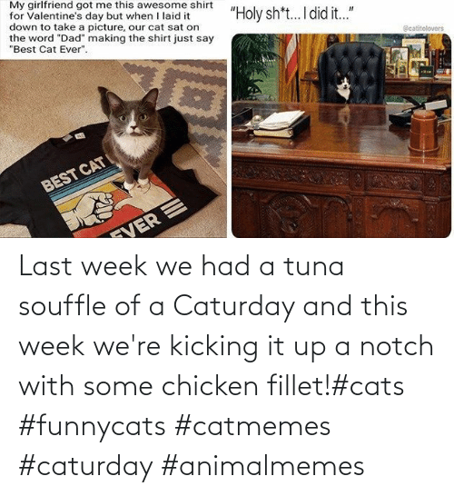 kicking: Last week we had a tuna souffle of a Caturday and this week we're kicking it up a notch with some chicken fillet!#cats #funnycats #catmemes #caturday #animalmemes