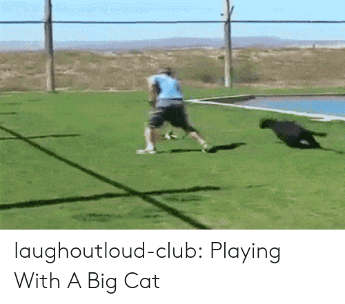 Club, Tumblr, and Blog: laughoutloud-club:  Playing With A Big Cat