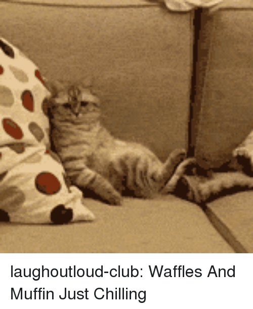 waffles: laughoutloud-club:  Waffles And Muffin Just Chilling