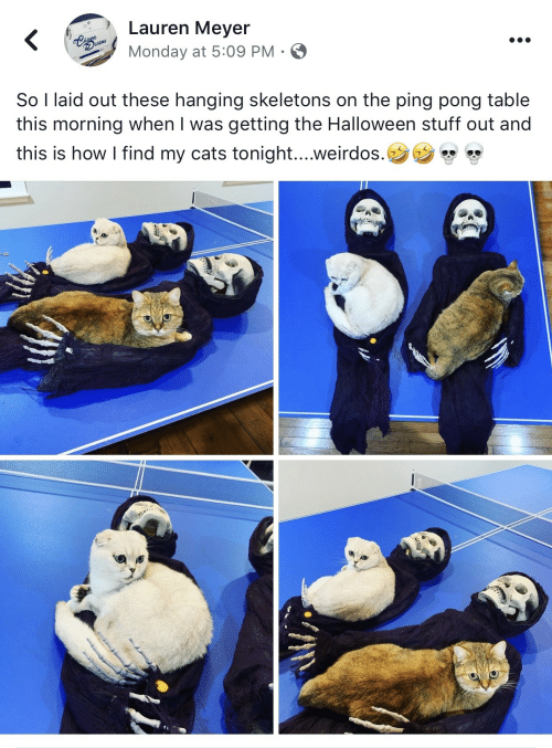 laid: Lauren Meyer  Cags  hasn  Drams  Monday at 5:09 PM .  So I laid out these hanging skeletons on the ping pong table  this morning when I was getting the Halloween stuff out and  this is how I find my cats tonight....weirdos.