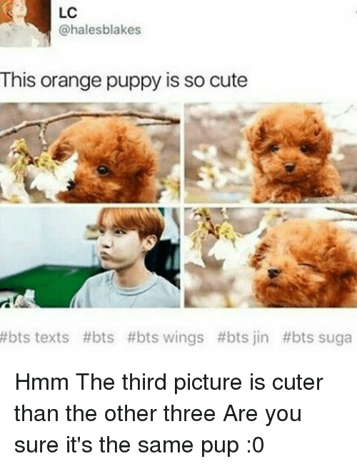 Cute, Orange, and Puppy: LC  @halesblakes  This orange puppy is so cute  #bts texts #bts #bts wings #bts jin #bts suga Hmm The third picture is cuter than the other three Are you sure it's the same pup :0