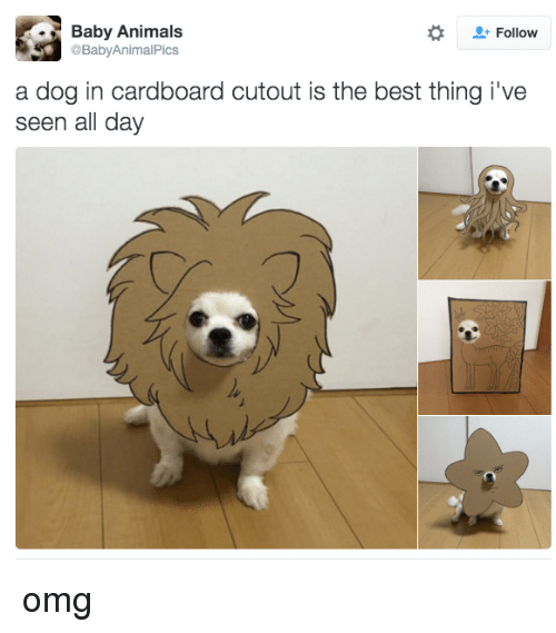 Baby Animal: ld. Baby Animals  Follow  @Baby AnimalPics  a dog in cardboard cutout is the best thing i've  seen all day omg