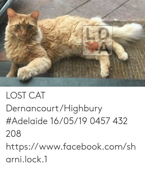 Facebook, Memes, and Lost: LD LOST CAT Dernancourt/Highbury #Adelaide 16/05/19 0457 432 208 https://www.facebook.com/sharni.lock.1