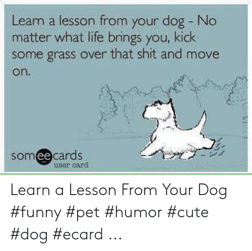 Ecard Memes: Learn a lesson from your dog No  matter what life brings you, kick  some grass over that shit and move  on.  someecards  user card Learn a Lesson From Your Dog #funny #pet #humor #cute #dog #ecard ...