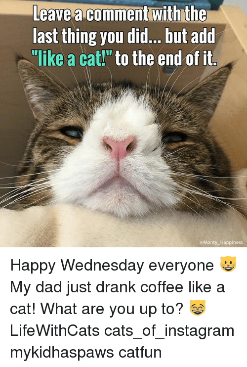 """happy wednesday: Leave comment With the  last thing you did... but add  """"like a cat!"""" to the end of it  Monty Happiness Happy Wednesday everyone 😺 My dad just drank coffee like a cat! What are you up to? 😸 LifeWithCats cats_of_instagram mykidhaspaws catfun"""