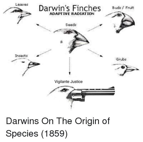 The Origin Of: Leaves  Darwin's Finches Buds/ Fruit  ADAPTIVE RADIATION  Seeds  Insects  Grubs  Vigilante Justice Darwins On The Origin of Species (1859)