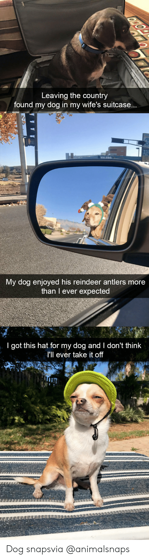Target, Tumblr, and Http: Leaving the country  found my dog in my wife's suitcase...   My dog enjoyed his reindeer antlers more  than I ever expected   I got this hat for my dog and I don't think  I'll ever take it off  Tin Dog snapsvia @animalsnaps