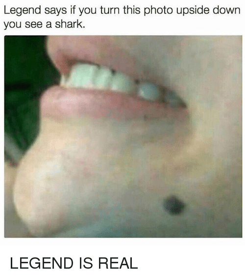 Sharked: Legend says if you turn this photo upside down  you see a shark. LEGEND IS REAL