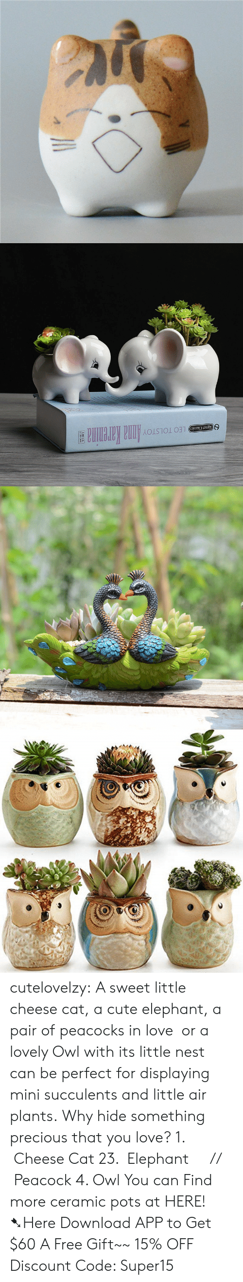 Cute, Love, and Precious: LEO TOLSTOYAnna Karenina  Signet Classics cutelovelzy: A sweet little cheese cat, a cute elephant, a pair of peacocks in love  or a lovely Owl with its little nest can be perfect for displaying mini succulents and little air plants. Why hide something precious that you love? 1.  Cheese Cat  23.  Elephant     //    Peacock  4. Owl  You can Find more ceramic pots at HERE!  ➷Here Download APP to Get $60  A Free Gift~~  15% OFF Discount Code: Super15