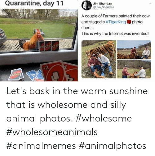 Animal, Wholesome, and Photos: Let's bask in the warm sunshine that is wholesome and silly animal photos. #wholesome #wholesomeanimals #animalmemes #animalphotos